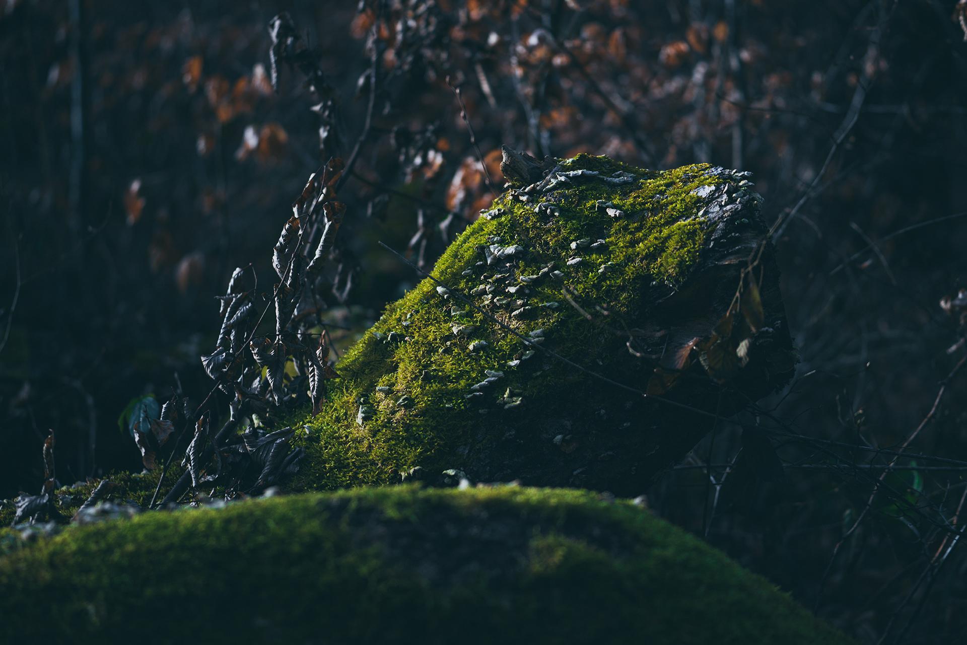 Herbst Stamm