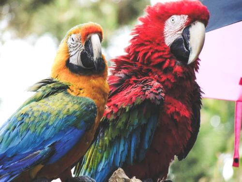 Papagei von der Lochmühle